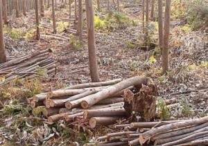Ayudas en Cantabria para la extración de la biomasa forestal residual