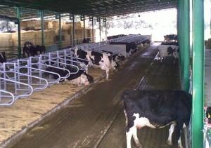 Ayudas de la Diputación de Córdoba para el fomento del ahorro energético en las cooperativas agrarias